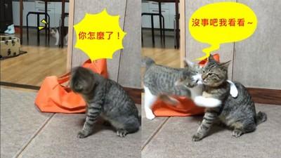 貓兄狂打噴嚏 貓弟上前關心結果…被嫌了QQ