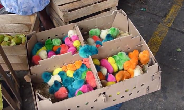 彩色小雞製作過程。(圖/翻攝自Youtube)