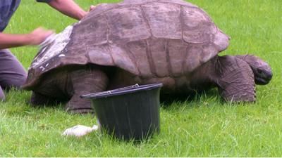 184年來第一次,「道光龜」洗澡了