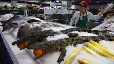 中國超市賣鱷魚日本震驚!吃鯨魚的沒資格說吃鱷魚的