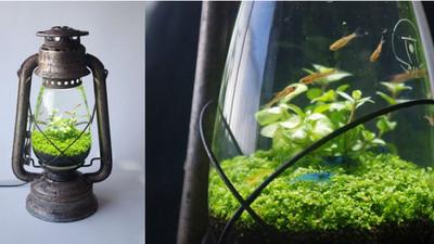 超靚!煤油燈改造魚缸 有意境到我都想住進去惹