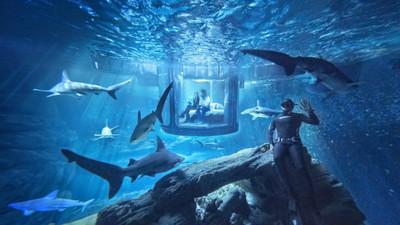 給你一個機會「和鯊魚一起睡」,你敢挑戰嗎?