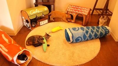 《貓咪收集》貓玩具實體化,終於能實際捕獲女僕貓❤