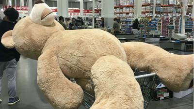 買了236公分高「姚明熊」,但要怎麼運回家呢?
