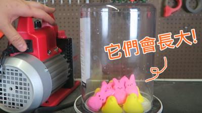 「真空吸引」神秘實驗!兔兔棉花糖因此活過來了(゚Д ゚)