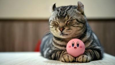 台灣萌貓貓+玩具攝影,誰都不能阻止我尖叫!!!