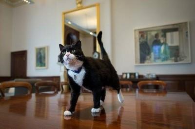 外交部超萌「捕鼠官」上任 來聽聽牠對國際情勢看法吧