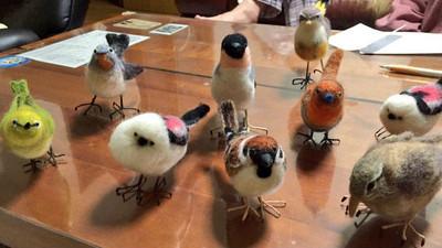 小鳥齊探頭展華麗羽色,羊毛氈寵物很適合多養幾隻