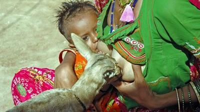 部落媽媽親自為小鹿哺乳 「我們聽得懂彼此的語言」