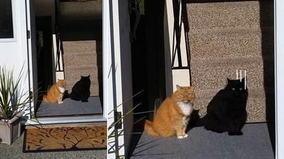 猜猜這張照片裡有幾隻貓?我只是黑,不是影子啦...