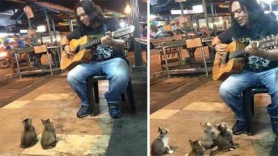 """男子自彈自唱沒人聽!旁邊真的只有""""小貓兩三隻"""""""