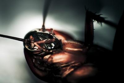 踩不死蟑螂機器人問世 將用於救援