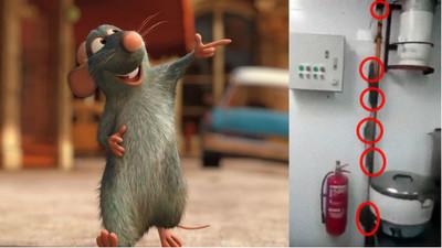 廚房有老鼠很正常!但出現12345678..(后里蟹)