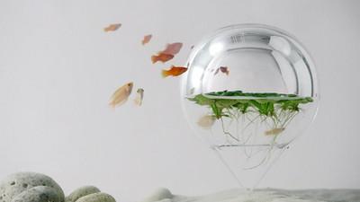 魚兒魚兒水中游..Σ(゚ω゚)居然還能游進熱氣球啊!