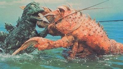 梅雨季導致「封印解除」,野生龍蝦開始找人類決鬥啦