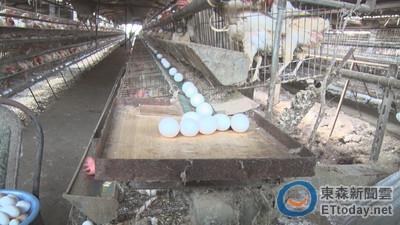 國賠?無辜蛋場解封「15萬顆蛋」 農委會給他們2個選擇
