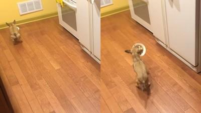 討厭獨自吃飯!小汪汪用絢爛腳法「倒退嚕」來到牠身旁