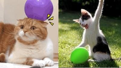 喵喵被氣球靜電干擾…蠢萌模樣讓你不想救牠!
