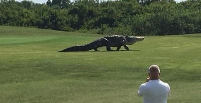 動物也搞穿越? 5尺長「史前巨鱷」霸氣現身高球場