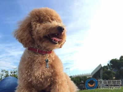 夏日帶愛犬散步去! 預防狗寶貝中暑6個注意事項