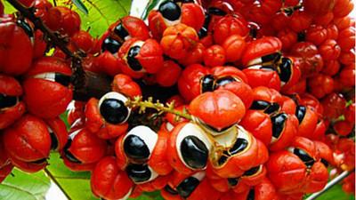 超密集水果4兄弟,考驗你的耐噁程度