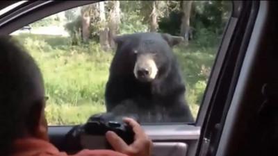 在荒郊野外遇到熊熊後,要怎麼撿回小命呢?