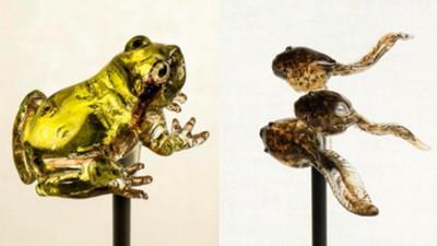 擬真青蛙、蝌蚪糖雕,一起放進嘴裡就變蛙蛙親子丼