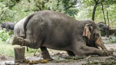 除了不棄養、拒絕繁殖場,作這5件事情能保護更多動物