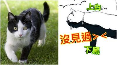 為何黑白貓只有「上黑下白」?獸醫解說讓我長知識
