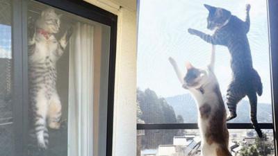 喵星人夏日進化►►►趴窗貓