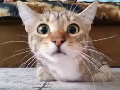 喵皇搖頭晃腦陪看恐怖片,一聲尖叫後..欸~我家貓咧?