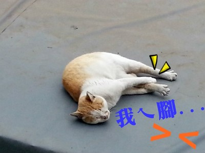 浪貓兒甜甜午睡中,突然「抱腿」是…抽筋要幫忙嗎?