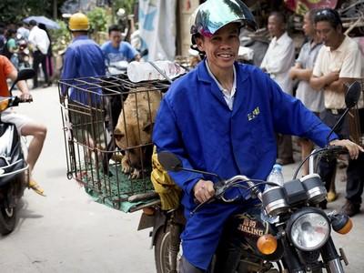 我吃狗肉我驕傲!中國玉林狗肉節現場簡直地獄