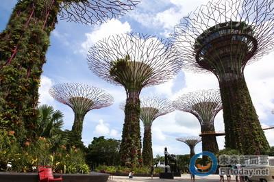 新加坡茲卡病毒已確診329例 疫區返台遵循「1+6原則」
