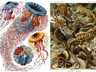 在沒照片的年代..他用藝術級手繪紀錄新物種!