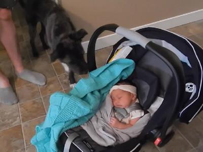 狗狗和小寶寶的第一次見面..牠反應讓我融化了❤