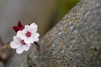喜歡櫻花還是仙人掌?從四種花看出妳深層的美麗特質