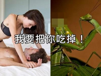 愛愛中吃掉對方!螳螂「超殘忍交配」背後原因你可知?