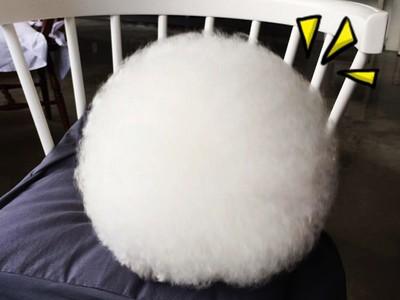 誰比牠吸睛!猜猜這顆「圓滾滾棉花球」是什麼生物?