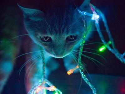 救命我家貓咪靈魂出竅啦!等等..那是另隻白貓?