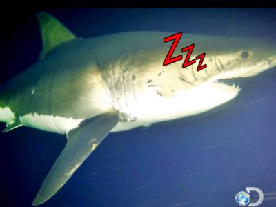 邊打呼邊遊泳!史上第一張「鯊魚睡覺萌照」看過沒?