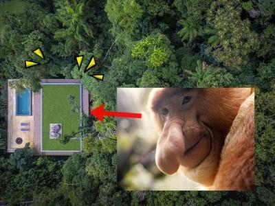 被茂密雨林環繞的秘宅!感覺自己就像隻...屌面猴