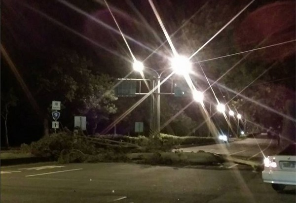 「尼伯特」襲台!台東風雨漸增 多處樹倒、招牌遭吹歪