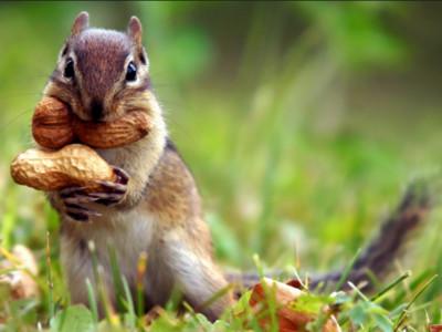 看來無害卻很危險10動物,松鼠不只會賣萌還能咬死狗