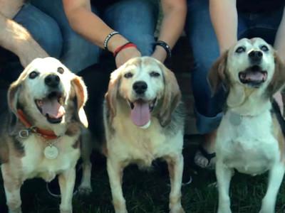 「實驗用狗」14年連陽光都沒看過,自由的第一秒..我哭了