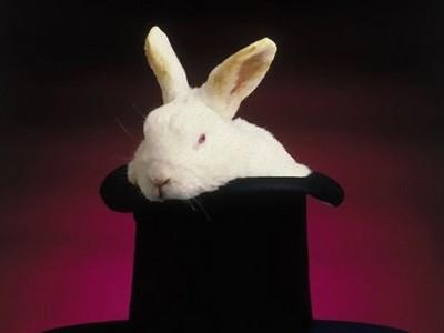 澳洲昆士蘭州禁止養兔子,除非你能證明自己是魔術師