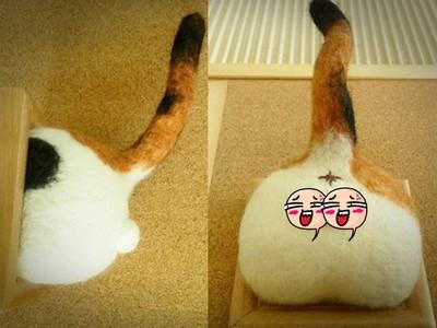 貓咪「蛋蛋」羊毛氈版本!直接掛牆上太害羞了吧>///<
