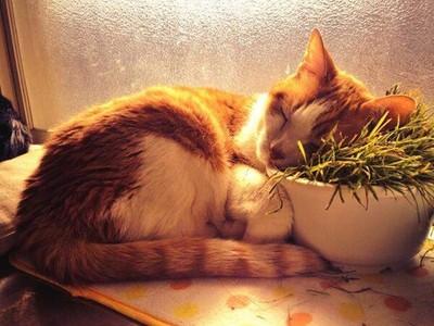 朕不給的通通當枕頭!欸..那倒在貓草上是嗑藥過量嗎?