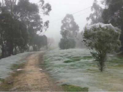 被薄絲覆蓋的迷霧之森,走近一看...有東西在動!