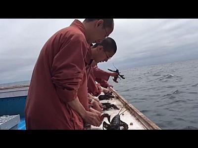 眼睛業障重怎麼辦?加國和尚買250公斤龍蝦放生海中